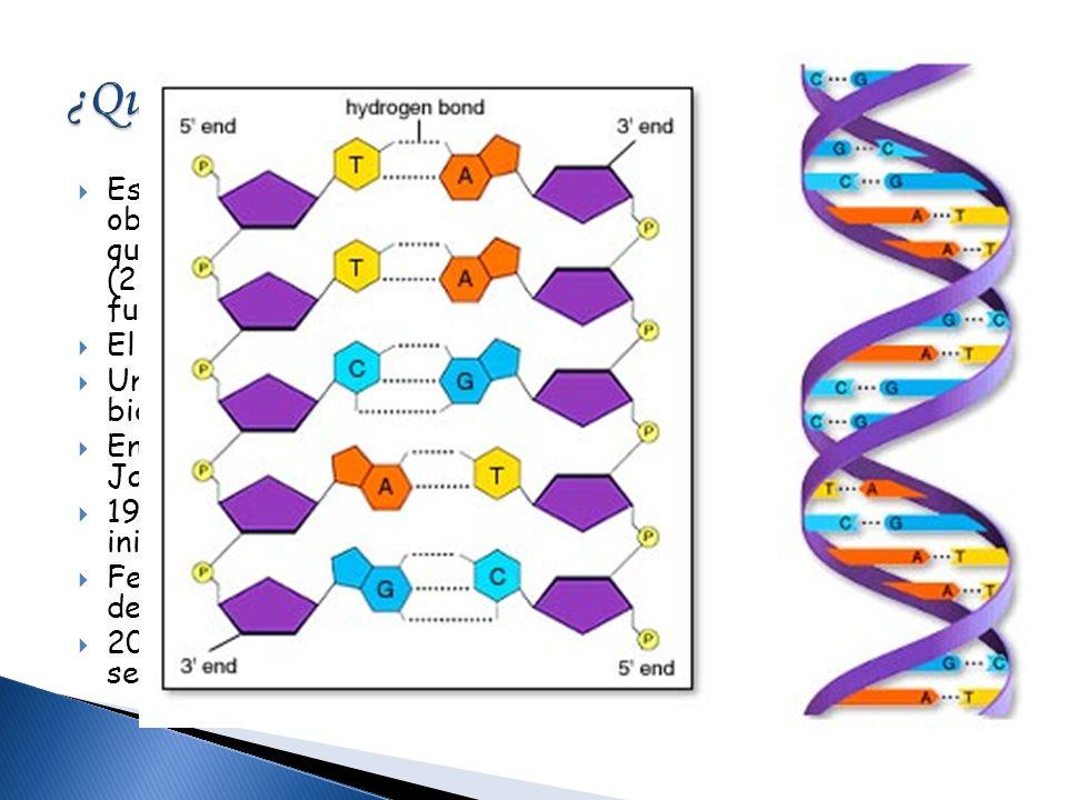 Es un programa internacional de colaboración científica cuyo objetivo es determinar la secuencia de pares de bases químicas en el ADN e identificar lo