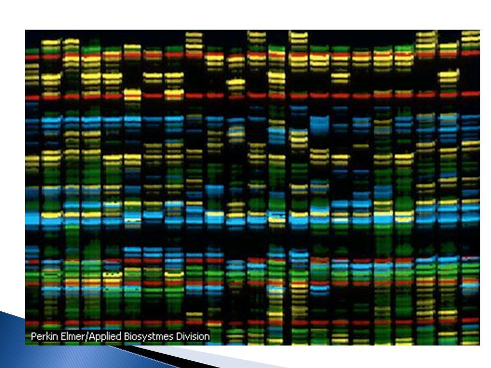 Obtención de la secuencia de los 3 mil millones de pares de bases que componen el genoma humano: A,T,C y G.