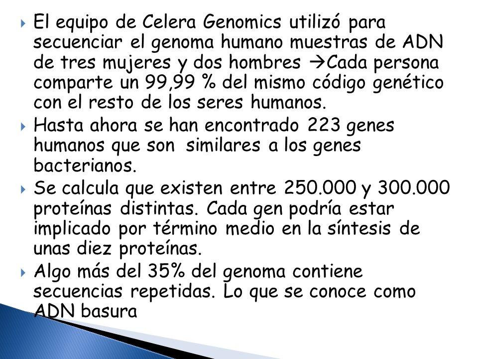 El equipo de Celera Genomics utilizó para secuenciar el genoma humano muestras de ADN de tres mujeres y dos hombres Cada persona comparte un 99,99 % d