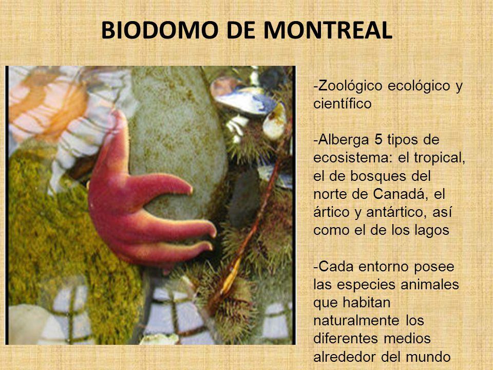 BIODOMO DE MONTREAL -Zoológico ecológico y científico -Alberga 5 tipos de ecosistema: el tropical, el de bosques del norte de Canadá, el ártico y antártico, así como el de los lagos -Cada entorno posee las especies animales que habitan naturalmente los diferentes medios alrededor del mundo