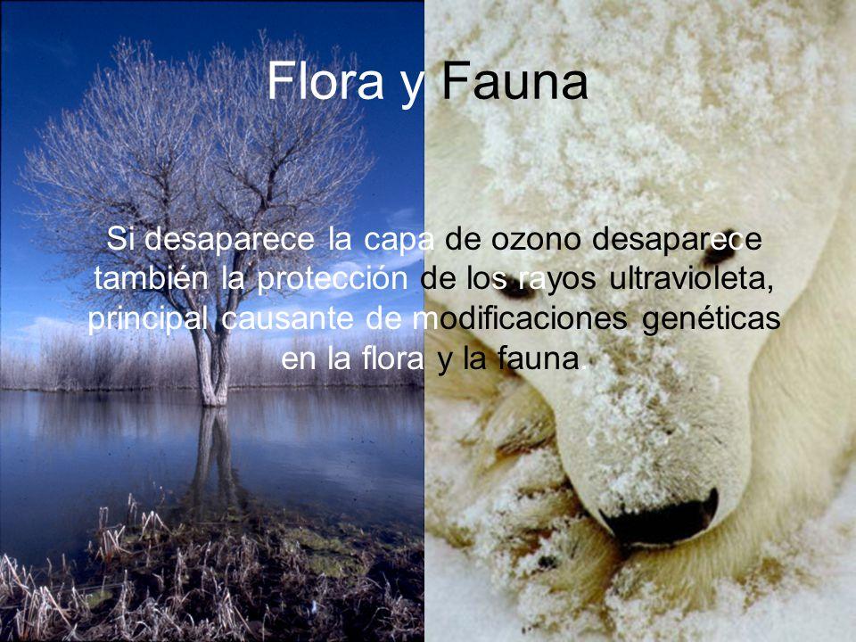 Flora y Fauna Si desaparece la capa de ozono desaparece también la protección de los rayos ultravioleta, principal causante de modificaciones genética