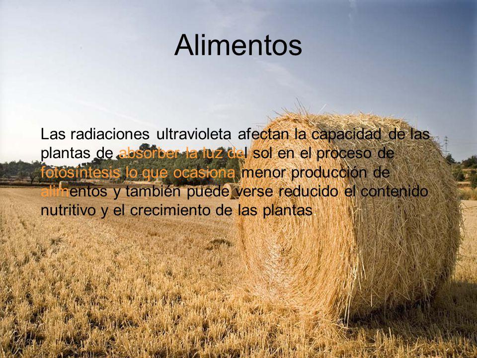 Alimentos Las radiaciones ultravioleta afectan la capacidad de las plantas de absorber la luz del sol en el proceso de fotosíntesis lo que ocasiona me