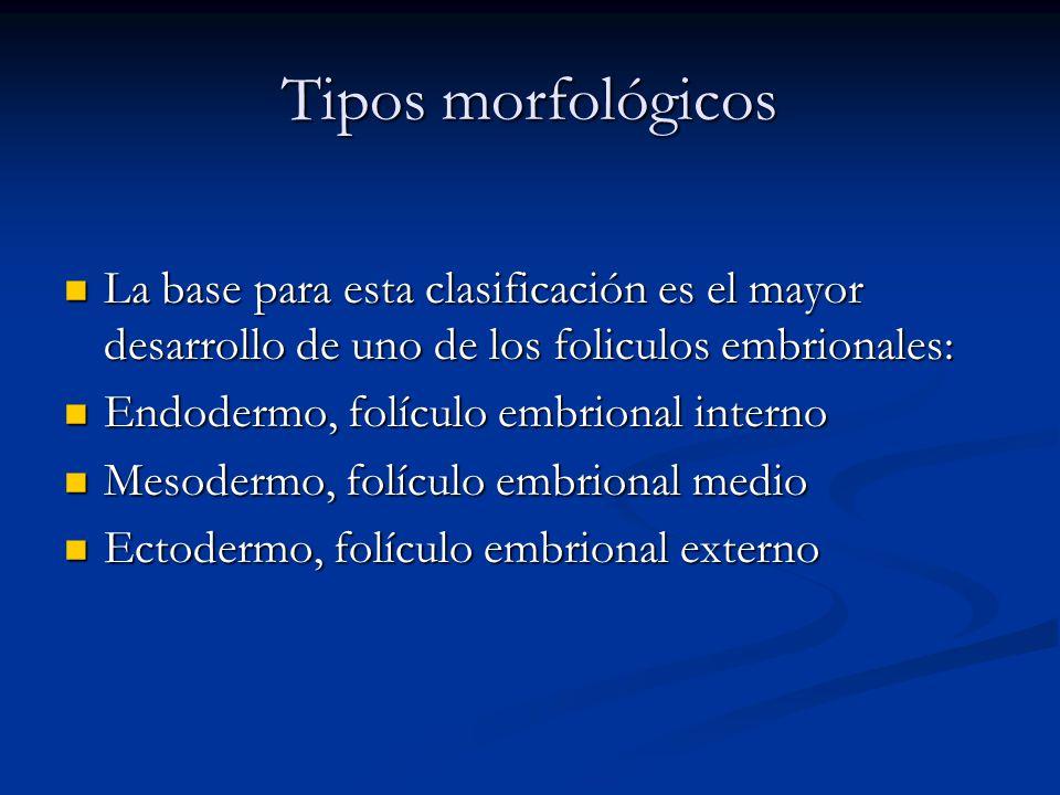 Tipos morfológicos La base para esta clasificación es el mayor desarrollo de uno de los foliculos embrionales: La base para esta clasificación es el m