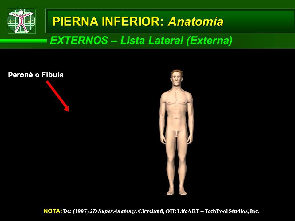 PIERNA INFERIOR: Anatomía EXTERNOS – Lista Lateral (Externa) NOTA: De: (1997) 3D Super Anatomy. Cleveland, OH: LifeART – TechPool Studios, Inc. Peroné