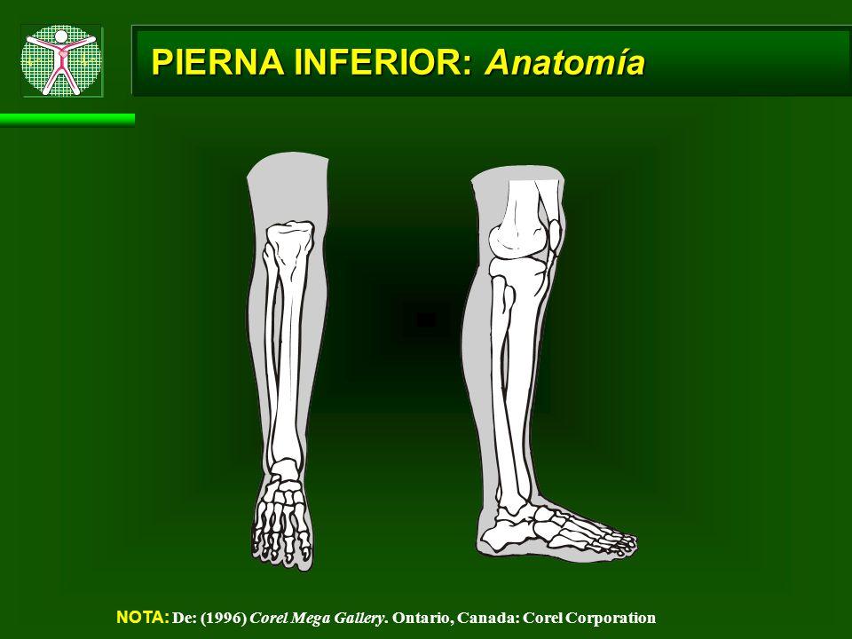 PIERNA INFERIOR: Anatomía NOTA: De: (1996) Corel Mega Gallery. Ontario, Canada: Corel Corporation