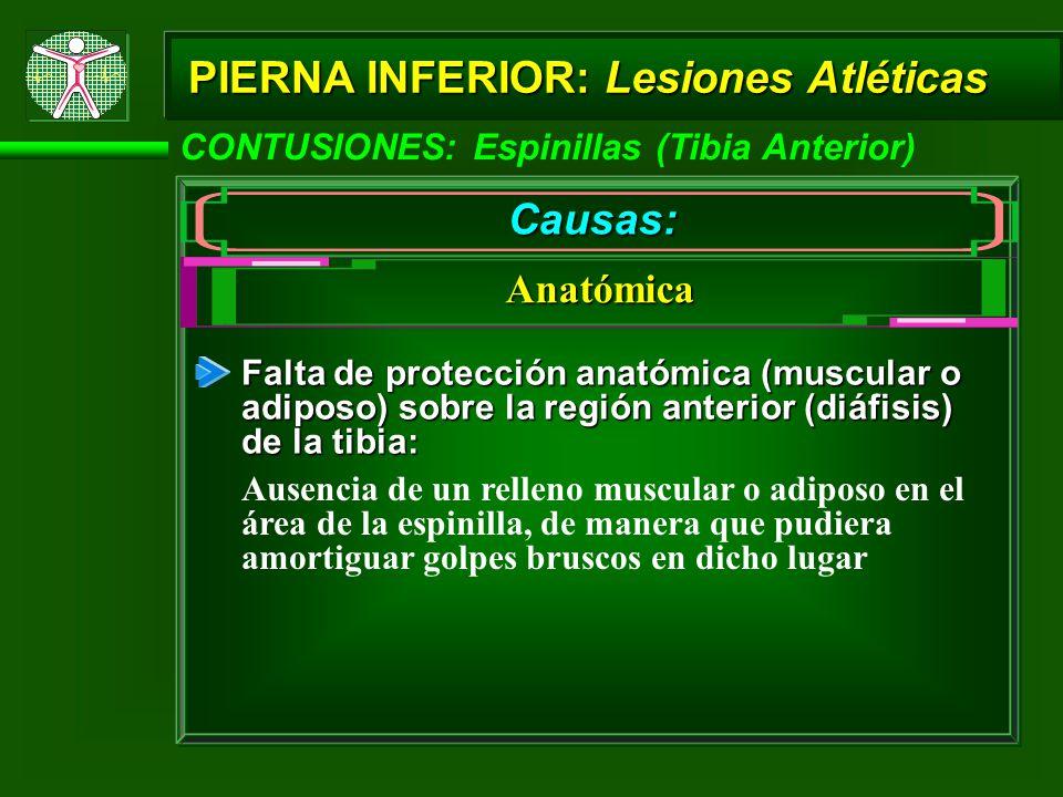 CONTUSIONES: Espinillas (Tibia Anterior) PIERNA INFERIOR: Lesiones Atléticas Causas: Anatómica Falta de protección anatómica (muscular o adiposo) sobre la región anterior (diáfisis) de la tibia: Ausencia de un relleno muscular o adiposo en el área de la espinilla, de manera que pudiera amortiguar golpes bruscos en dicho lugar
