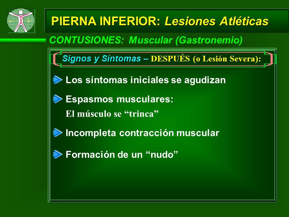 PIERNA INFERIOR: Lesiones Atléticas CONTUSIONES: Muscular (Gastronemio) Signos y Síntomas – DESPUÉS (o Lesión Severa): Los síntomas iniciales se agudizan Espasmos musculares: El músculo se trinca Incompleta contracción muscular Formación de un nudo