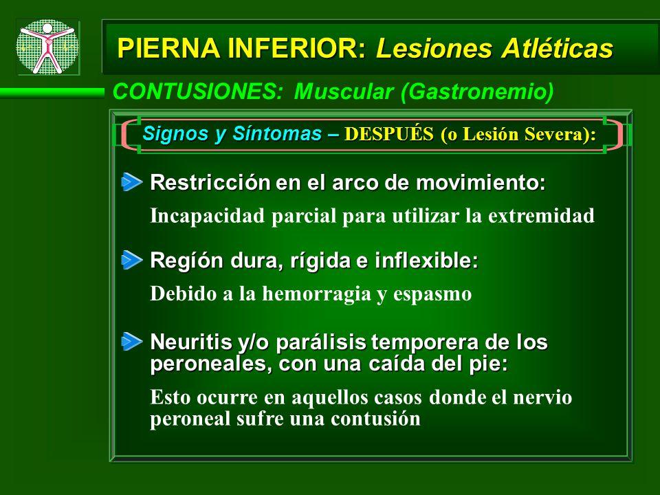 PIERNA INFERIOR: Lesiones Atléticas CONTUSIONES: Muscular (Gastronemio) Signos y Síntomas – DESPUÉS (o Lesión Severa): Restricción en el arco de movimiento: Incapacidad parcial para utilizar la extremidad Regíón dura, rígida e inflexible: Debido a la hemorragia y espasmo Neuritis y/o parálisis temporera de los peroneales, con una caída del pie: Esto ocurre en aquellos casos donde el nervio peroneal sufre una contusión
