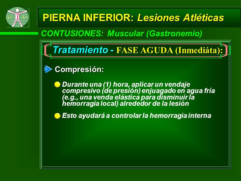 PIERNA INFERIOR: Lesiones Atléticas CONTUSIONES: Muscular (Gastronemio) Tratamiento - FASE AGUDA (Inmediáta): Compresión: Durante una (1) hora, aplicar un vendaje compresivo (de presión) enjuagado en agua fría (e.g., una venda elástica para disminuir la hemorragia local) alrededor de la lesión Esto ayudará a controlar la hemorragia interna