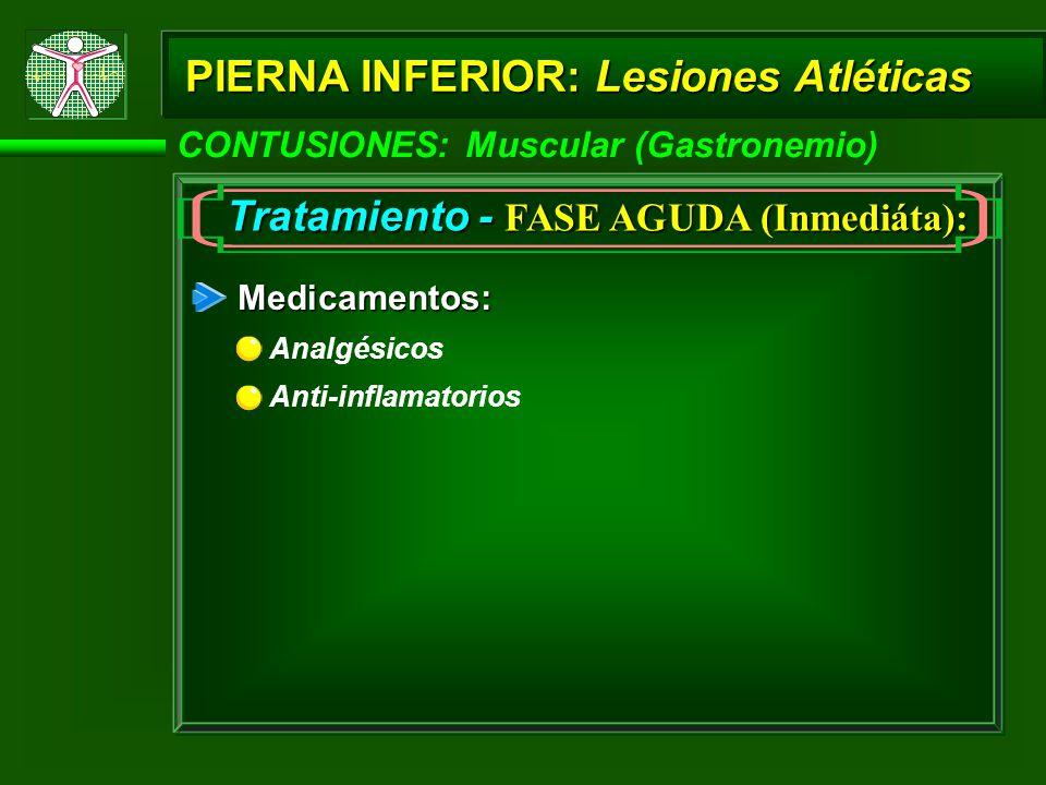 PIERNA INFERIOR: Lesiones Atléticas CONTUSIONES: Muscular (Gastronemio) Tratamiento - FASE AGUDA (Inmediáta): Medicamentos: Analgésicos Anti-inflamatorios