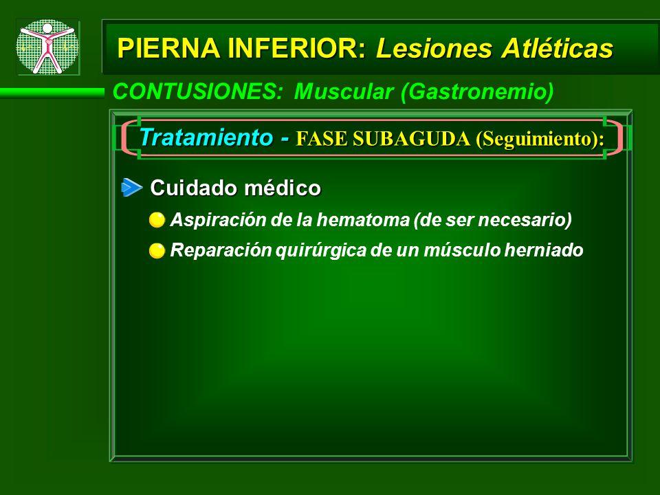 PIERNA INFERIOR: Lesiones Atléticas CONTUSIONES: Muscular (Gastronemio) Tratamiento - FASE SUBAGUDA (Seguimiento): Cuidado médico Aspiración de la hematoma (de ser necesario) Reparación quirúrgica de un músculo herniado