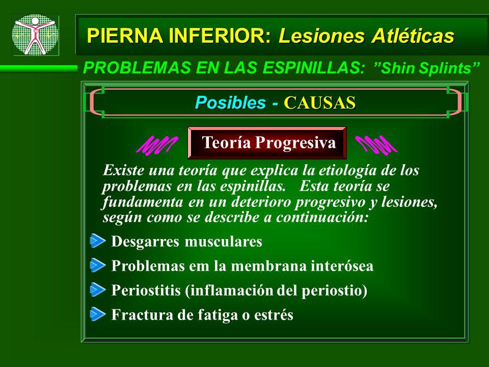 PIERNA INFERIOR: Lesiones Atléticas PROBLEMAS EN LAS ESPINILLAS: Shin Splints Posibles - CAUSAS Teoría Progresiva Desgarres musculares Problemas em la