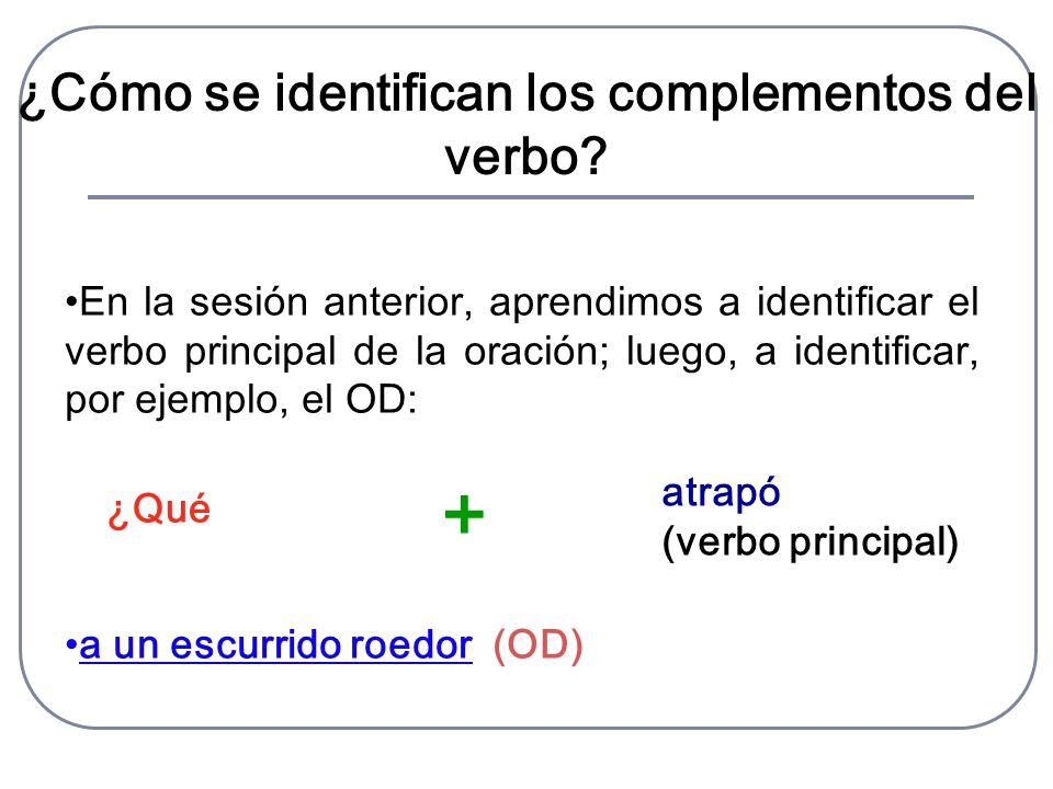 En la sesión anterior, aprendimos a identificar el verbo principal de la oración; luego, a identificar, por ejemplo, el OD: a un escurrido roedor (OD) ¿Cómo se identifican los complementos del verbo.