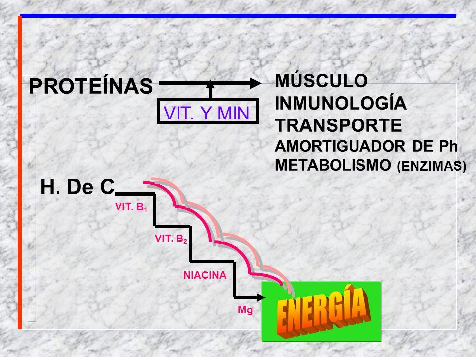 PROTEÍNAS MÚSCULO INMUNOLOGÍA TRANSPORTE AMORTIGUADOR DE Ph METABOLISMO (ENZIMAS) VIT. Y MIN H. De C. VIT. B 1 VIT. B 2 NIACINA Mg