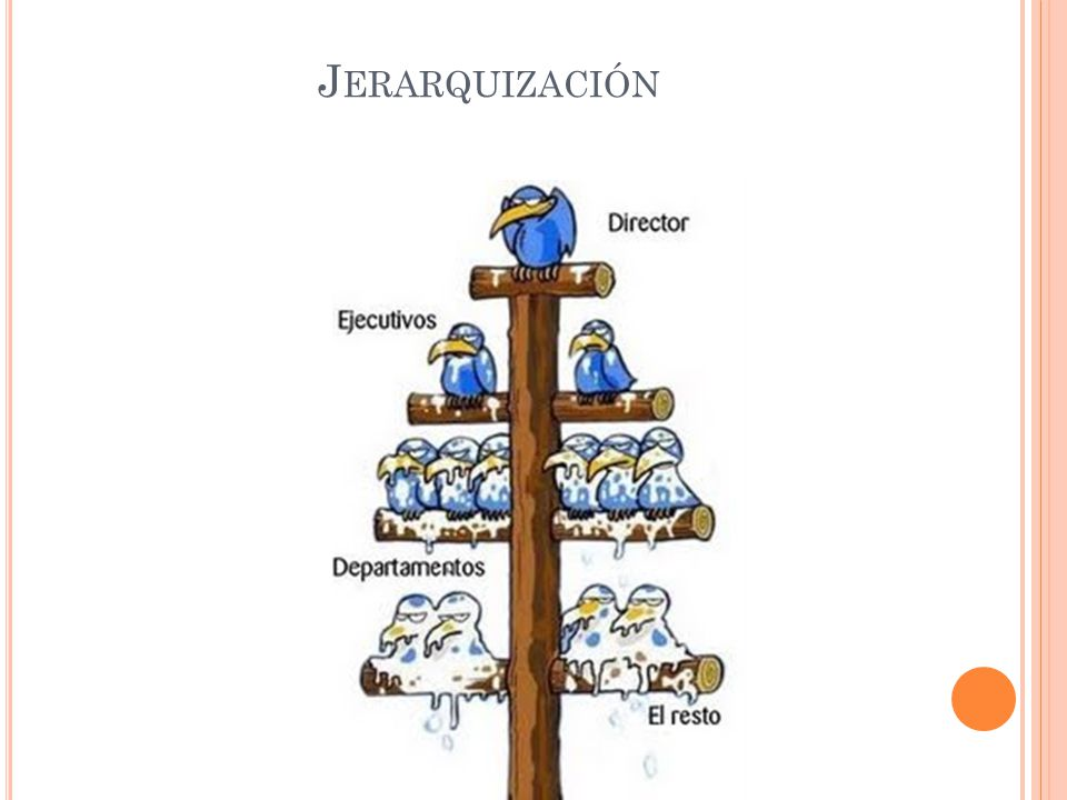 J ERARQUIZACIÓN