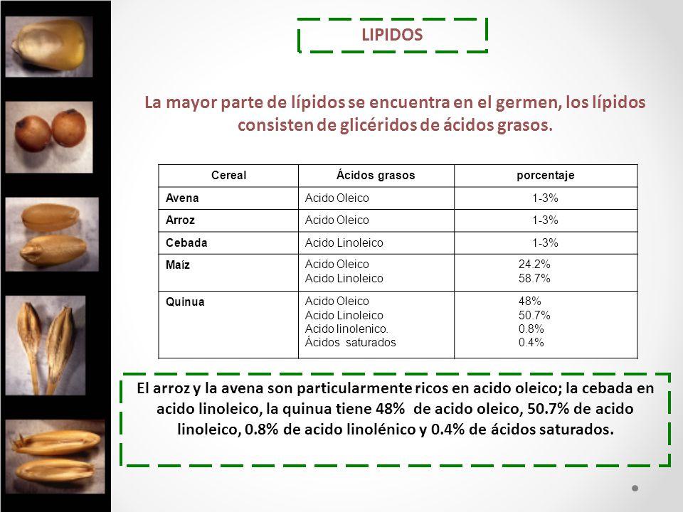 LIPIDOS El arroz y la avena son particularmente ricos en acido oleico; la cebada en acido linoleico, la quinua tiene 48% de acido oleico, 50.7% de aci