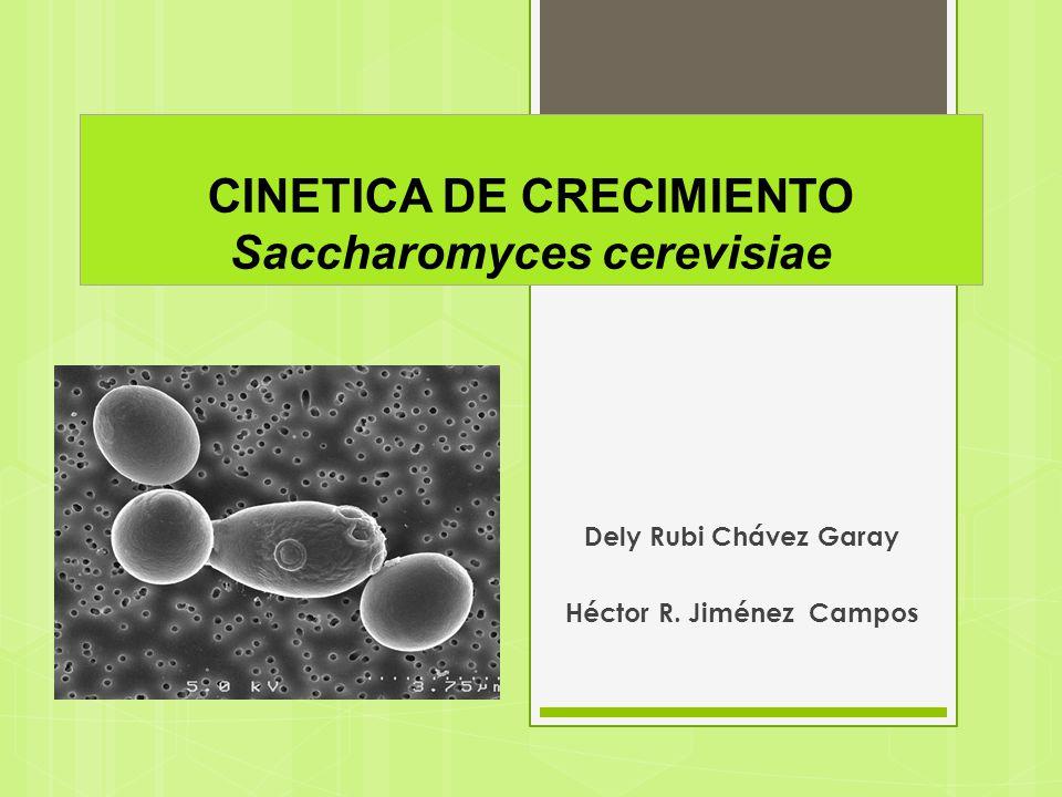 CINETICA DE CRECIMIENTO Saccharomyces cerevisiae Dely Rubi Chávez Garay Héctor R. Jiménez Campos