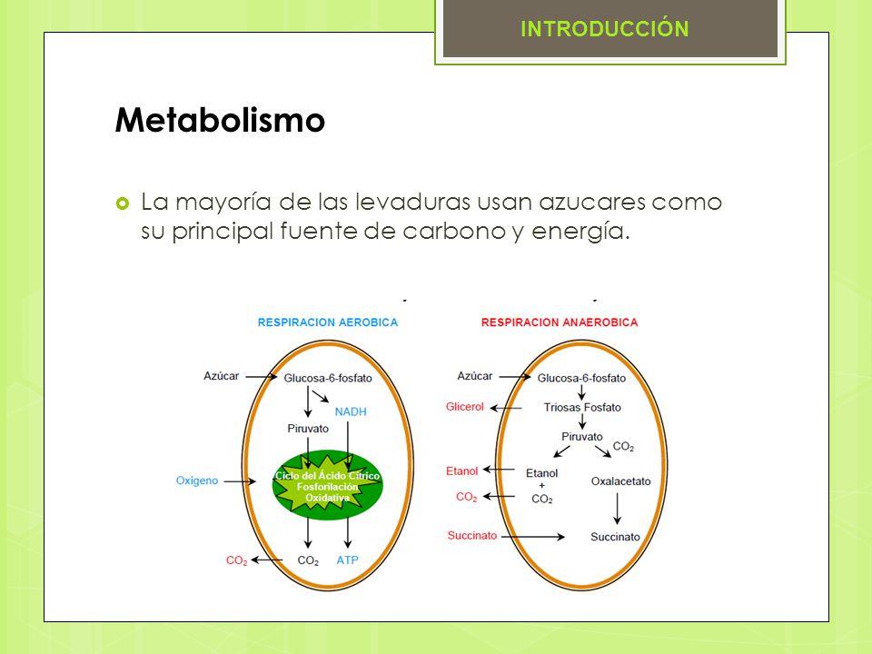 Metabolismo La mayoría de las levaduras usan azucares como su principal fuente de carbono y energía. INTRODUCCIÓN