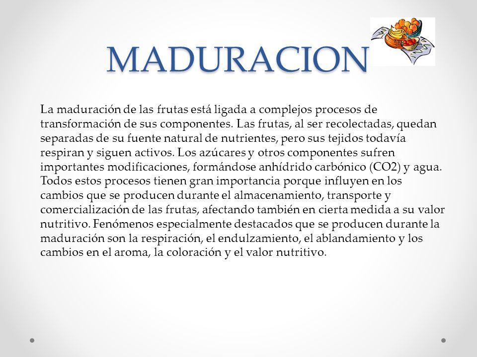 MADURACION La maduración de las frutas está ligada a complejos procesos de transformación de sus componentes. Las frutas, al ser recolectadas, quedan