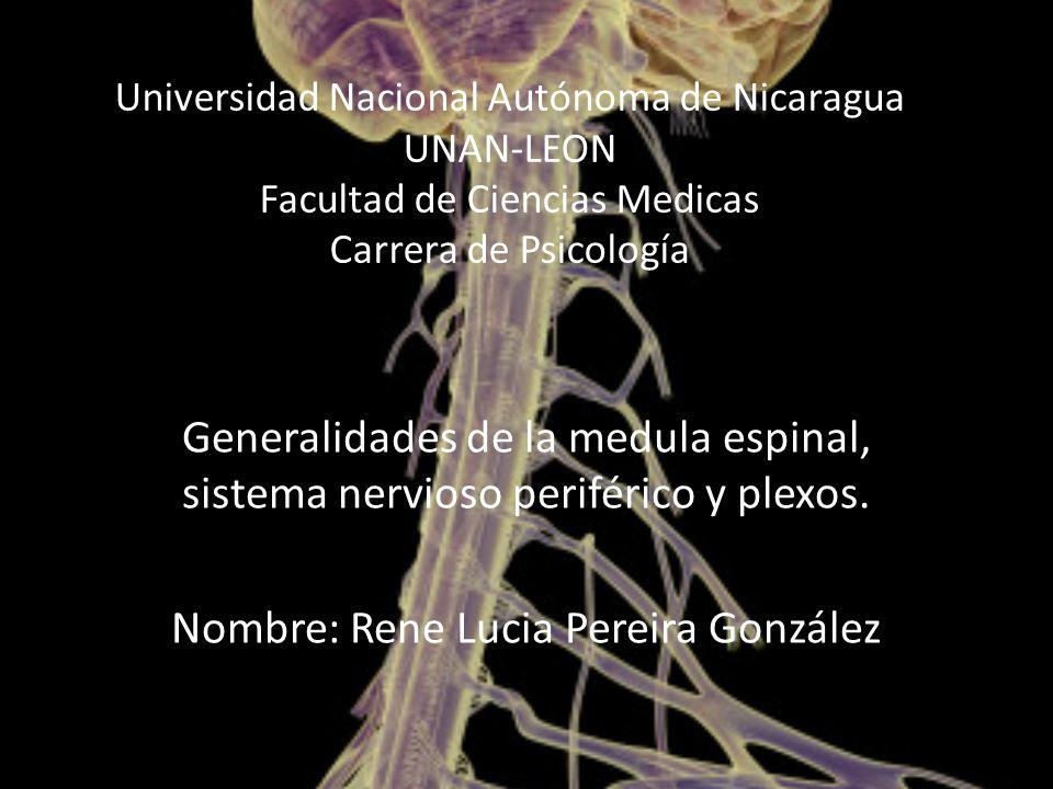 Universidad Nacional Autónoma de Nicaragua UNAN-LEON Facultad de Ciencias Medicas Carrera de Psicología Generalidades de la medula espinal, sistema nervioso periférico y plexos.