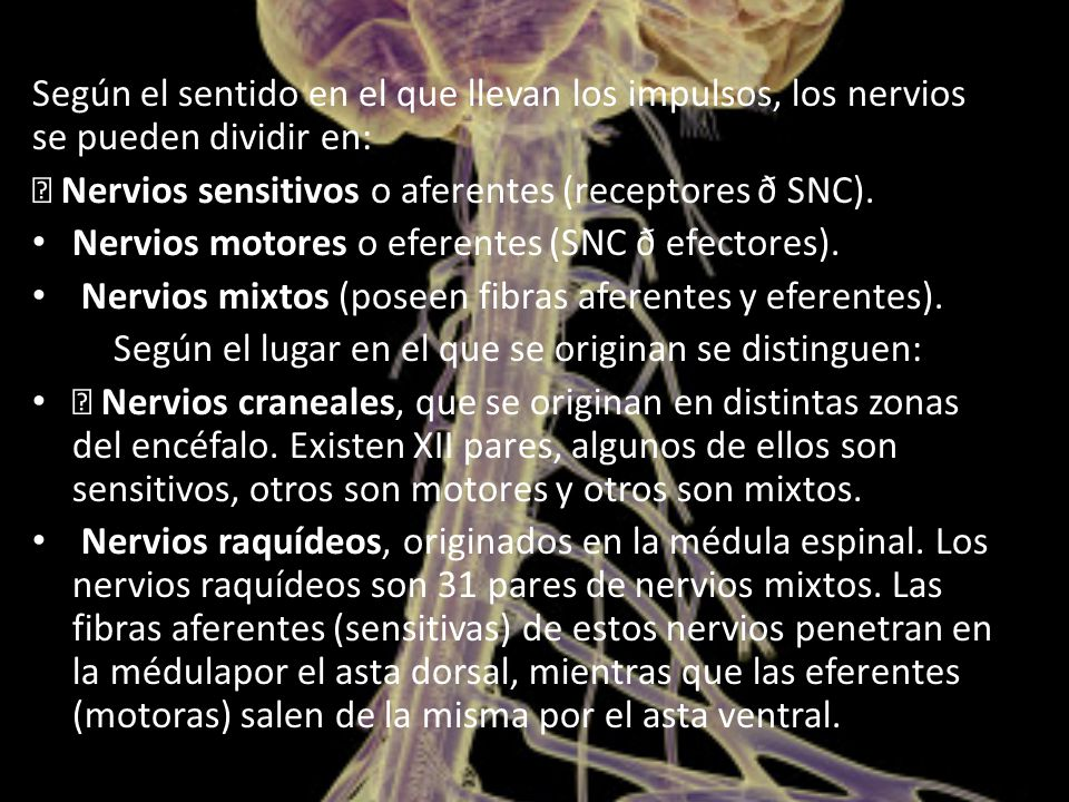 Según el sentido en el que llevan los impulsos, los nervios se pueden dividir en:  Nervios sensitivos o aferentes (receptores ð SNC).