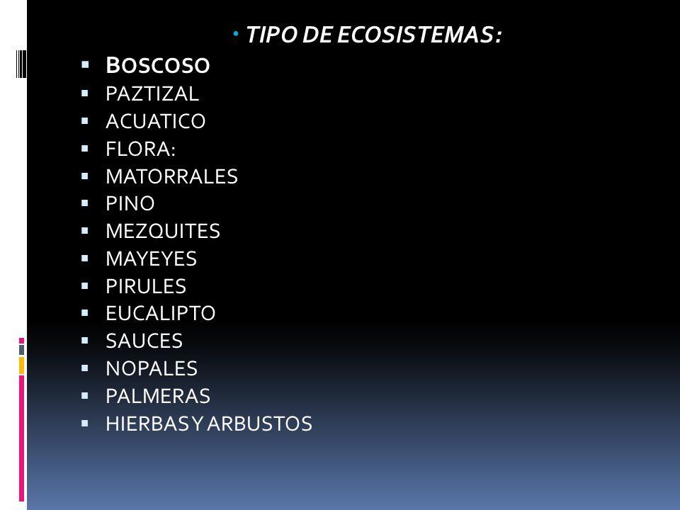 TIPO DE ECOSISTEMAS: B OSCOSO PAZTIZAL ACUATICO FLORA: MATORRALES PINO MEZQUITES MAYEYES PIRULES EUCALIPTO SAUCES NOPALES PALMERAS HIERBAS Y ARBUSTOS