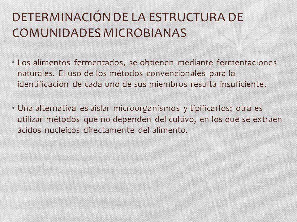 DETERMINACIÓN DE LA ESTRUCTURA DE COMUNIDADES MICROBIANAS Los alimentos fermentados, se obtienen mediante fermentaciones naturales.