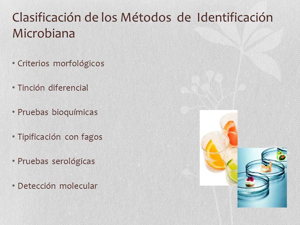 Criterios morfológicos Los rasgos morfológicos (estructurales) han ayudado clasificar organismos.