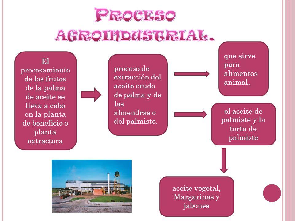 El procesamiento de los frutos de la palma de aceite se lleva a cabo en la planta de beneficio o planta extractora proceso de extracción del aceite cr