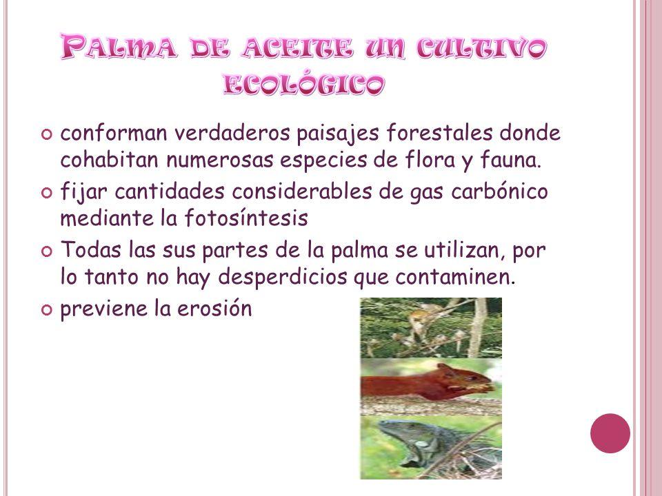 conforman verdaderos paisajes forestales donde cohabitan numerosas especies de flora y fauna. fijar cantidades considerables de gas carbónico mediante