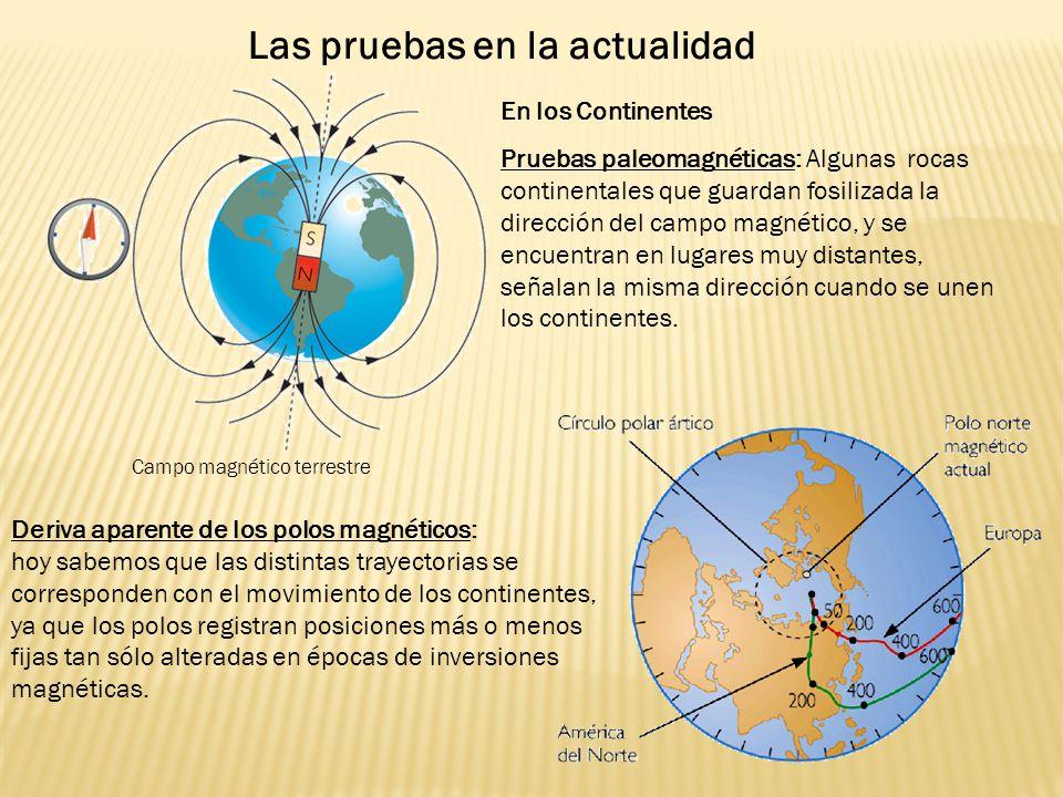 En los Continentes Pruebas paleomagnéticas: Algunas rocas continentales que guardan fosilizada la dirección del campo magnético, y se encuentran en lugares muy distantes, señalan la misma dirección cuando se unen los continentes.