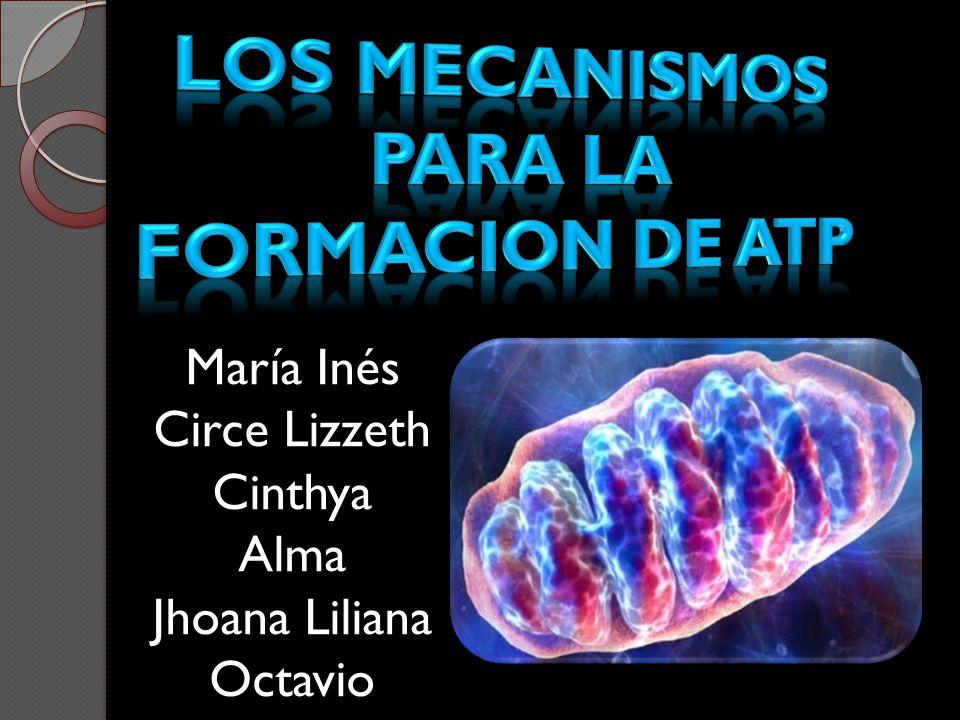 Humberto Fernández Moran examinó mitocondrias aisladas, con la ayuda de la técnica de tinción negativa.