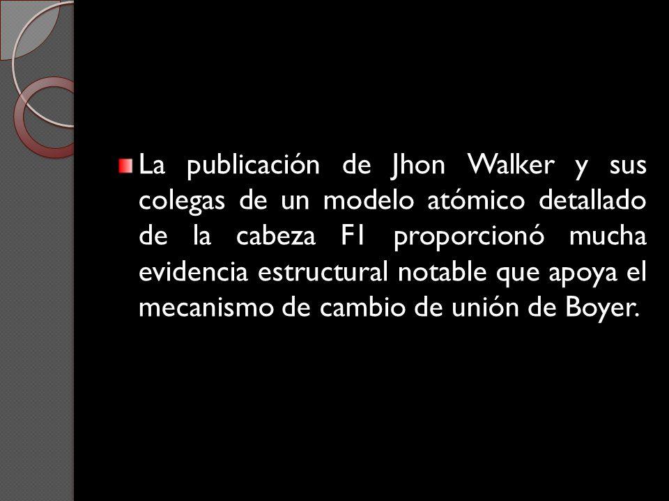 La publicación de Jhon Walker y sus colegas de un modelo atómico detallado de la cabeza F1 proporcionó mucha evidencia estructural notable que apoya e