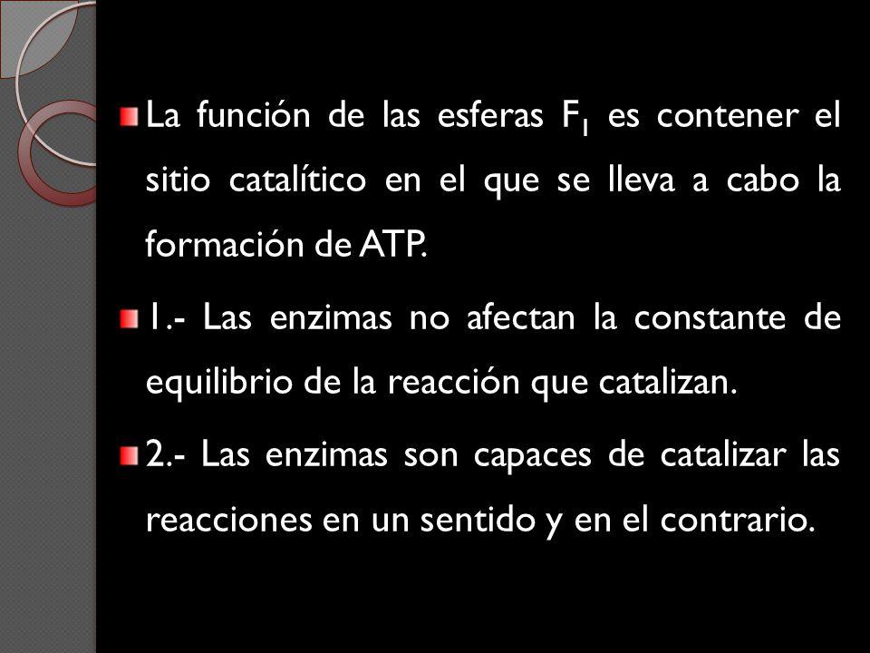 La función de las esferas F 1 es contener el sitio catalítico en el que se lleva a cabo la formación de ATP. 1.- Las enzimas no afectan la constante d