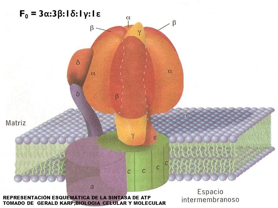 Reside dentro de la membrana (consta de 3 polipéptidos con una esquiometría de ab 2 c 10-14.