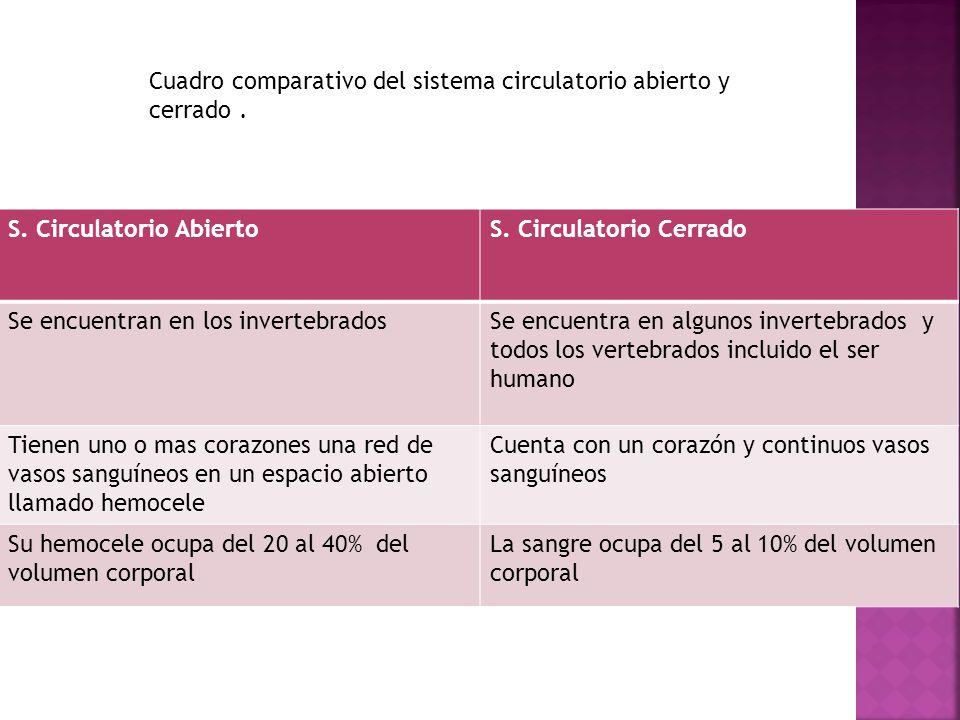 S.Circulatorio AbiertoS.