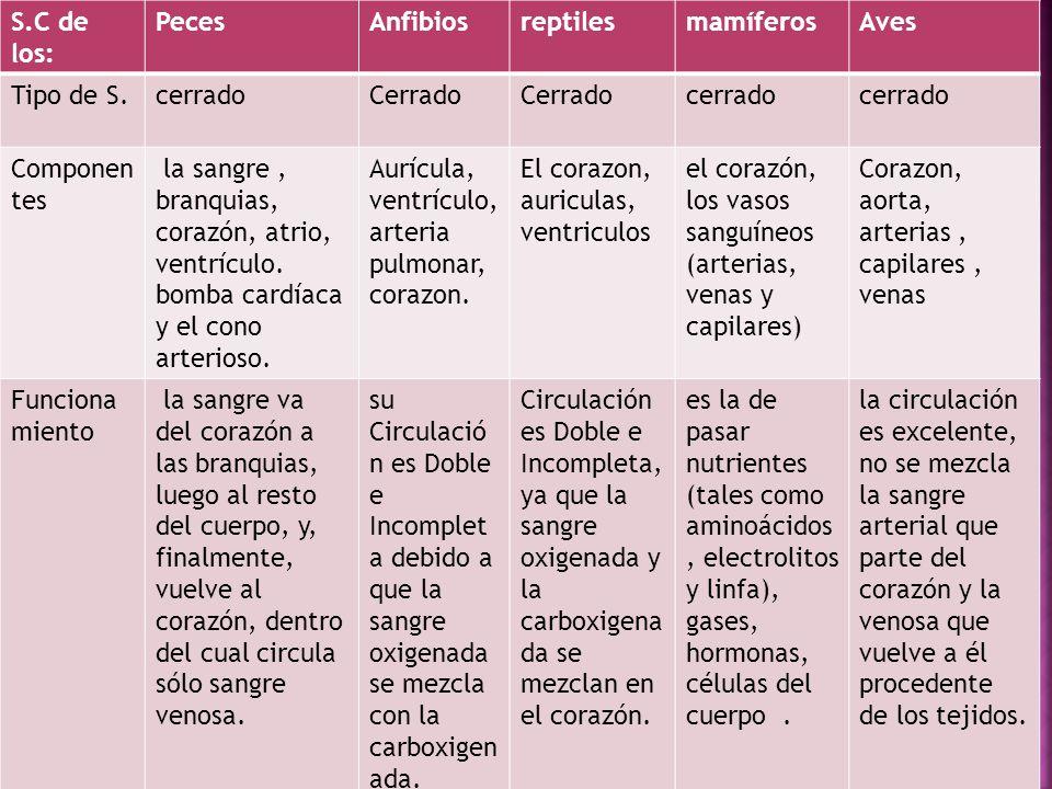 S.C de los: PecesAnfibiosreptilesmamíferosAves Tipo de S.cerradoCerrado cerrado Componen tes la sangre, branquias, corazón, atrio, ventrículo. bomba c