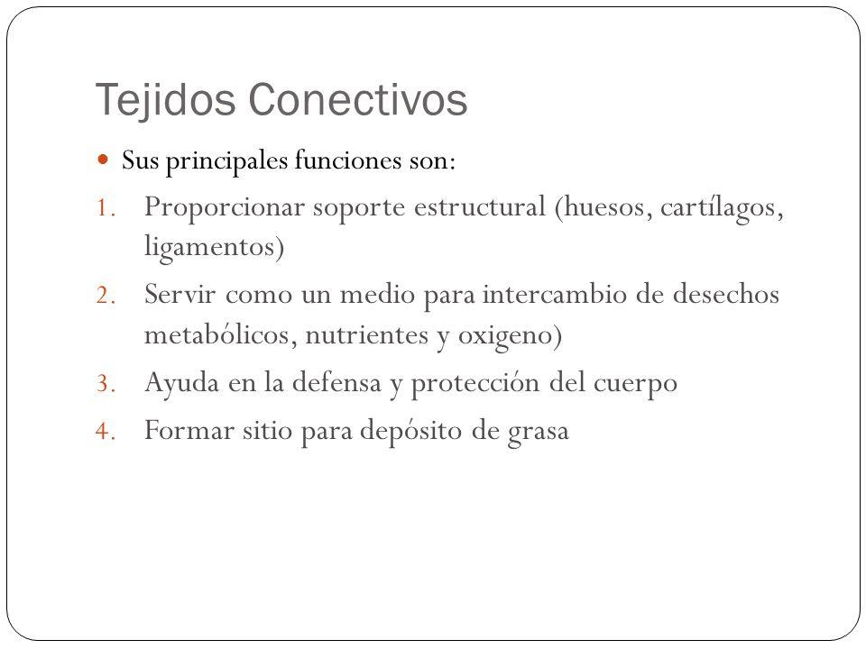 Tejidos Conectivos Sus principales funciones son: 1. Proporcionar soporte estructural (huesos, cartílagos, ligamentos) 2. Servir como un medio para in