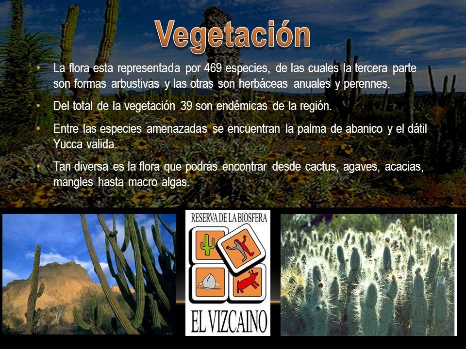 En 1988 por gobierno mexicano y por la UNESCO en 1993 formándolo patrimonio de la humanidad.
