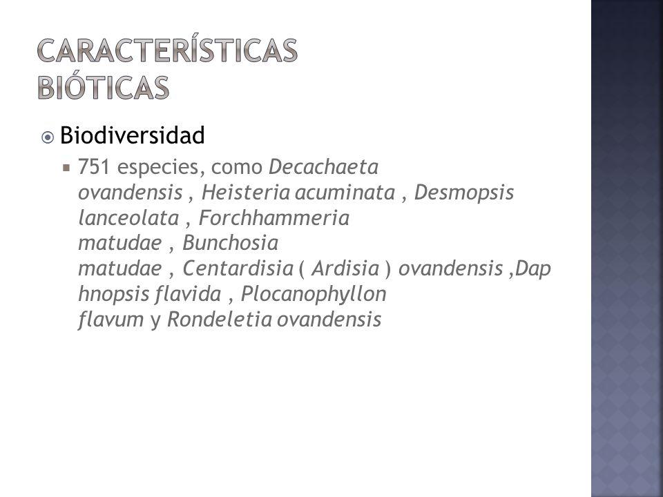 Biodiversidad 751 especies, como Decachaeta ovandensis, Heisteria acuminata, Desmopsis lanceolata, Forchhammeria matudae, Bunchosia matudae, Centardis
