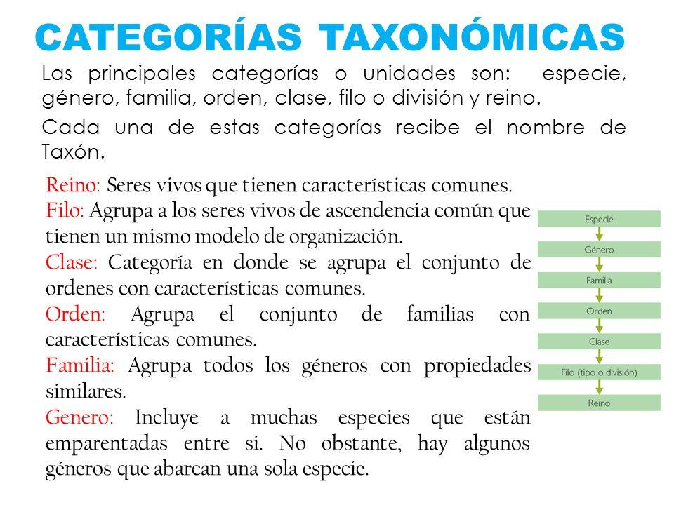 CATEGORÍAS TAXONÓMICAS Las principales categorías o unidades son: especie, género, familia, orden, clase, filo o división y reino. Cada una de estas c