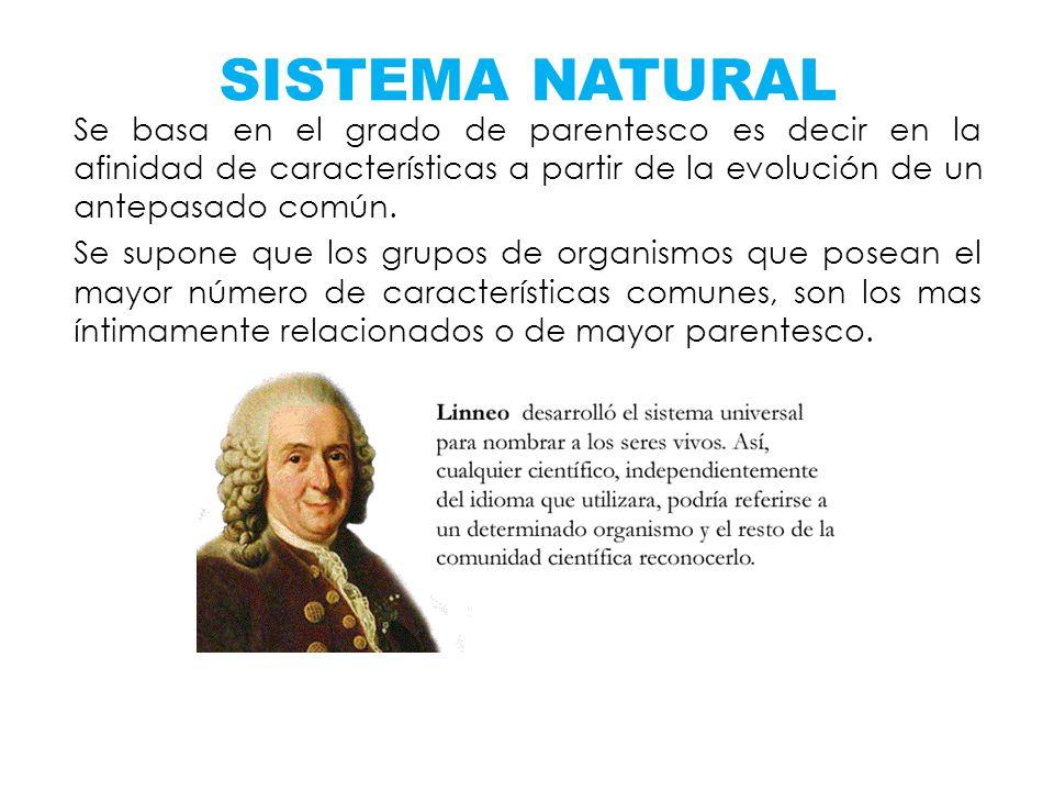 Se basa en el grado de parentesco es decir en la afinidad de características a partir de la evolución de un antepasado común. Se supone que los grupos