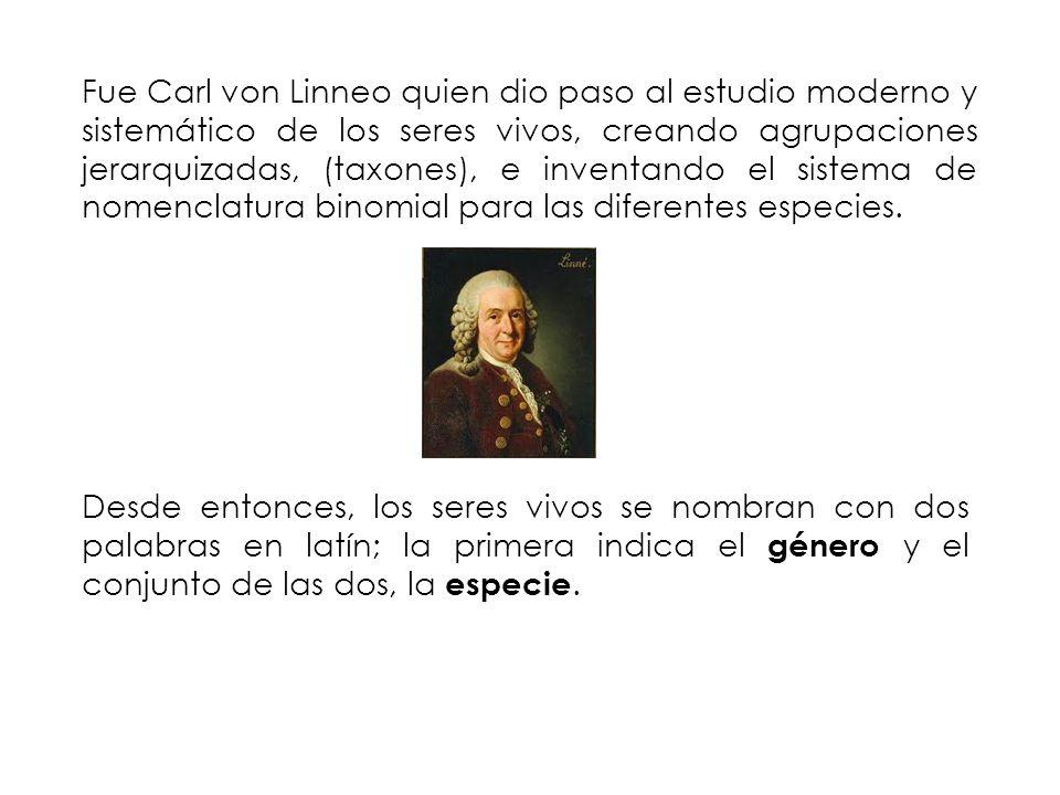 Fue Carl von Linneo quien dio paso al estudio moderno y sistemático de los seres vivos, creando agrupaciones jerarquizadas, (taxones), e inventando el