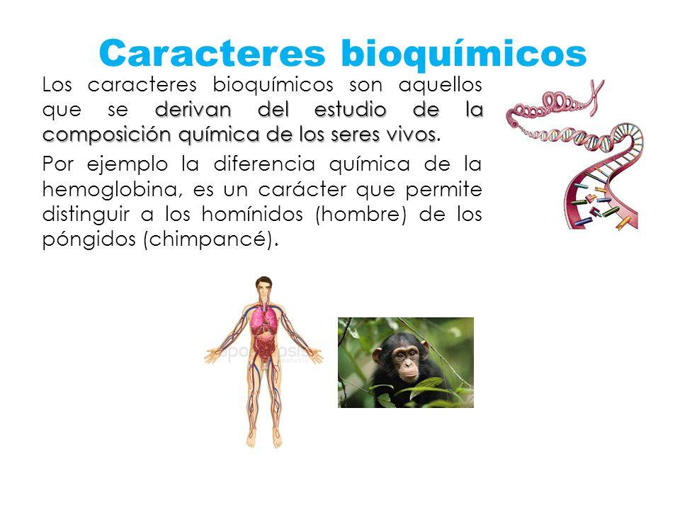 Caracteres bioquímicos derivan del estudio de la composición química de los seres vivos Los caracteres bioquímicos son aquellos que se derivan del est