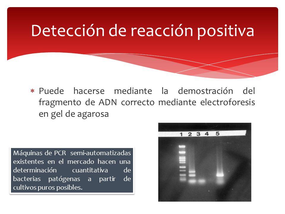 Puede hacerse mediante la demostración del fragmento de ADN correcto mediante electroforesis en gel de agarosa Detección de reacción positiva Máquinas