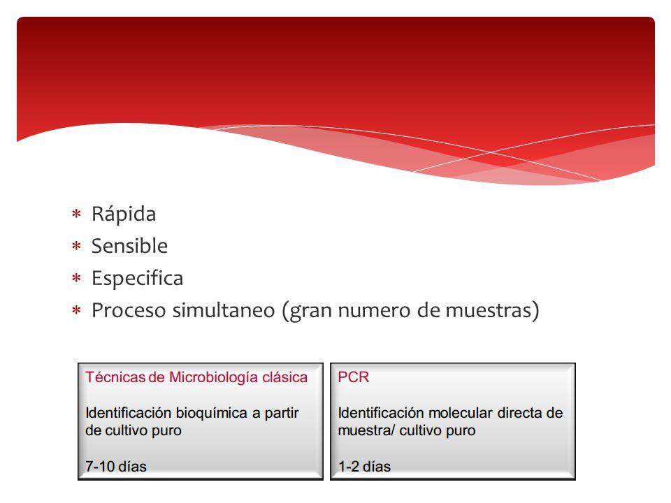 Rápida Sensible Especifica Proceso simultaneo (gran numero de muestras)