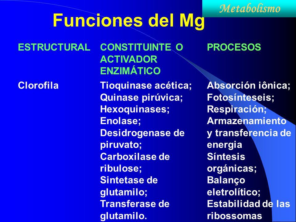 Funciones del Mg ESTRUCTURALCONSTITUINTE O ACTIVADOR ENZIMÁTICO PROCESOS ClorofilaTioquinase acética; Quinase pirúvica; Hexoquinases; Enolase; Desidro