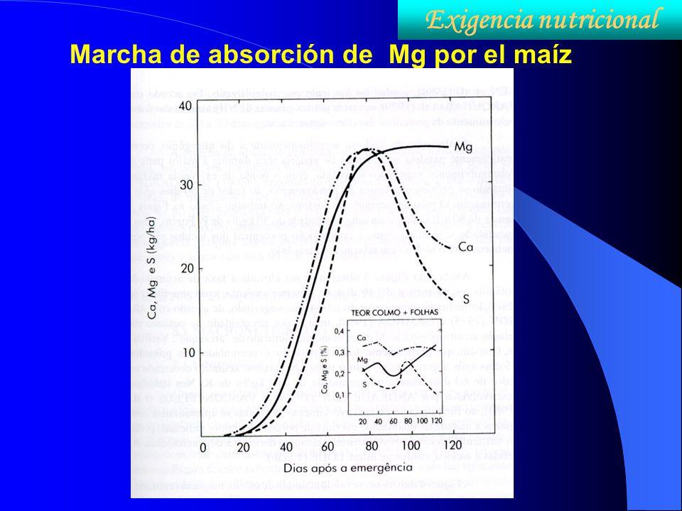 Marcha de absorción de Mg por el maíz Exigencia nutricional