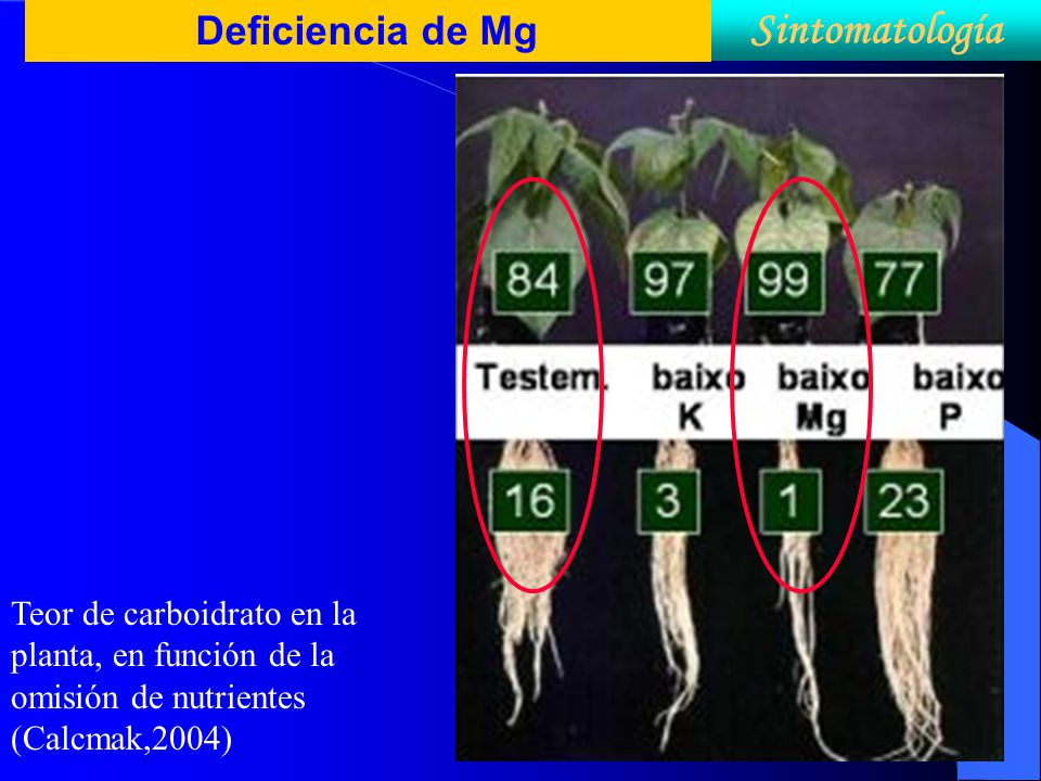 Deficiencia de Mg Sintomatología Teor de carboidrato en la planta, en función de la omisión de nutrientes (Calcmak,2004)