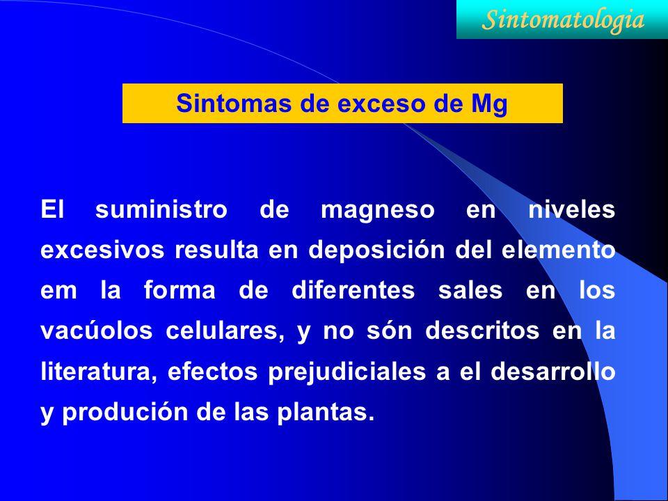 Sintomas de exceso de Mg El suministro de magneso en niveles excesivos resulta en deposición del elemento em la forma de diferentes sales en los vacúo